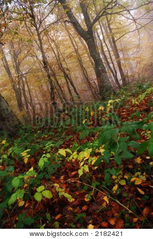 Autumn Forest Haze