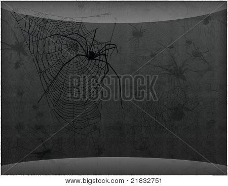 spiders with spider web