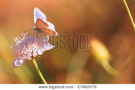 Little butterfly flitting