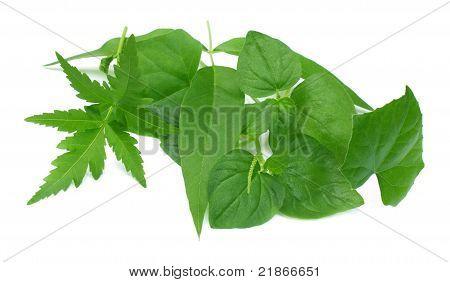 Close up of some medicinal herbs