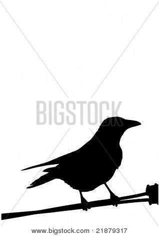 a silhouette of a bird isolated on white