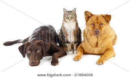 Three Pets Together