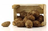 stock photo of taro corms  - bunch of taro root - JPG