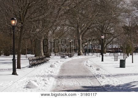 Winter In A Park