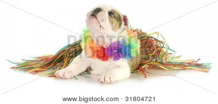 holiday dog - english bulldog wearing hawaiian lei and skirt