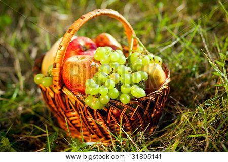 basket full of fruits on the grass