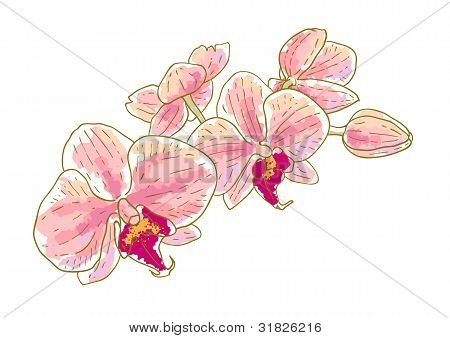 Branch of orchids