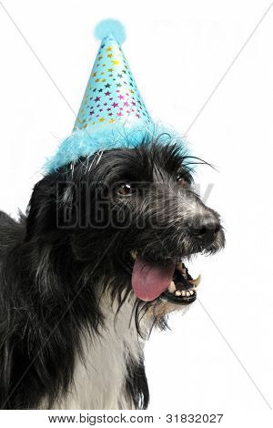 Dog wearing party cone, isolated