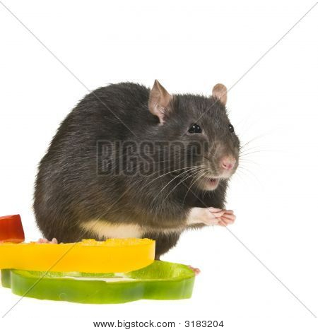 Funny Rat And Bell Pepper Cuts