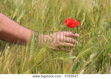 Touching A Flower