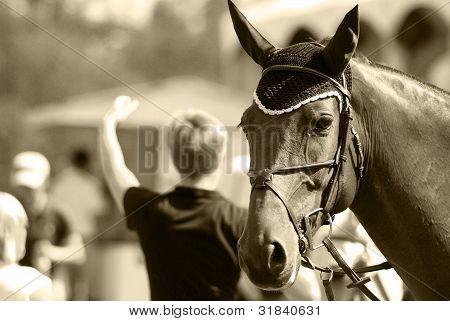 Horse portrait whit outdoor show pumpinig scenery