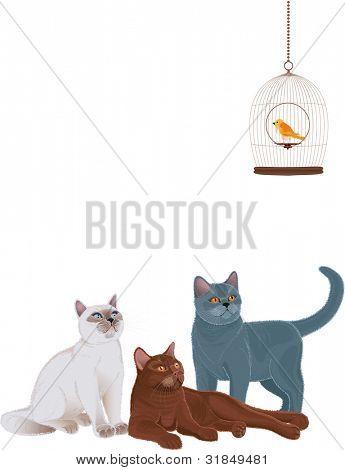 Gruppe von Katzen betrachten der Vogelkäfig over white Background. Jede Katze ist gruppiert.