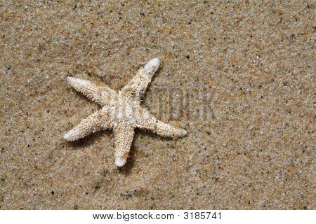 Cape Cod Starfish Macro