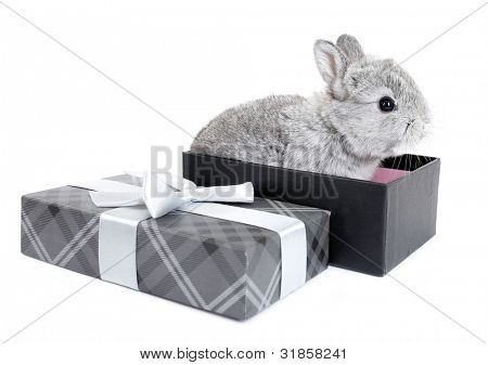 Gray rabbit bunny baby in lovely gift box