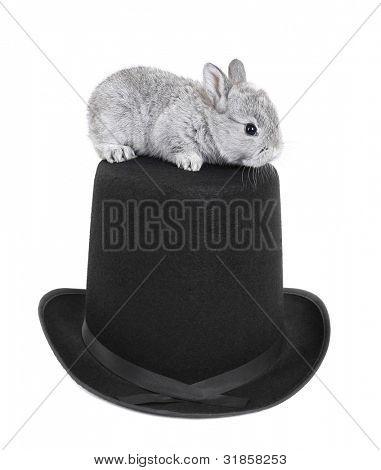 Gray rabbit bunny baby exit from blue heart gift box