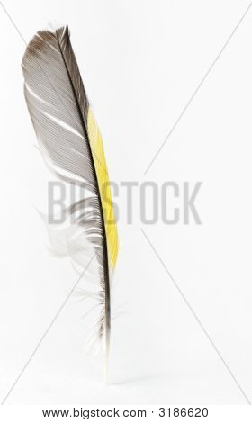 Feather
