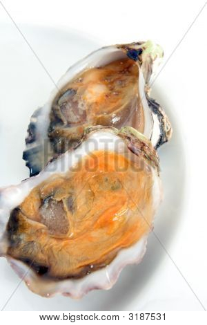 Oyster, Clam Or Shellfish