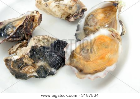 Oyster, Clam Shellfish Or Mussel