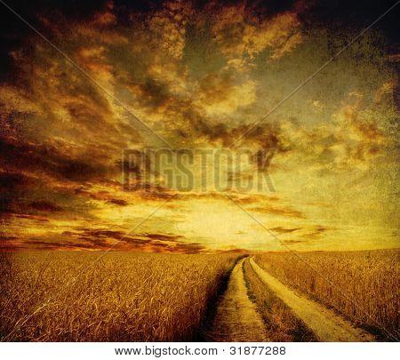 Camino rural de tierra a través del campo
