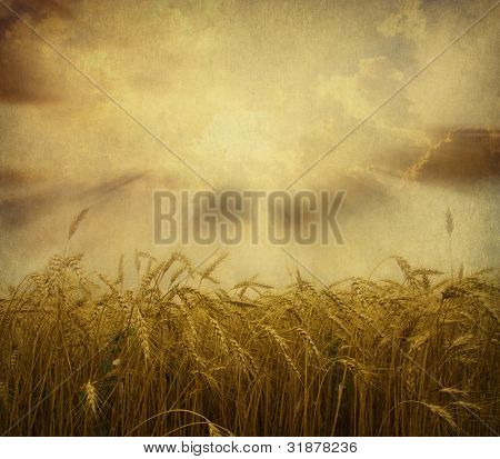 Ears of wheat on a grunge background