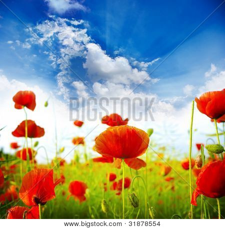 Red poppies on green field, sky and  clouds