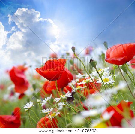 Flor de amapola en el cielo