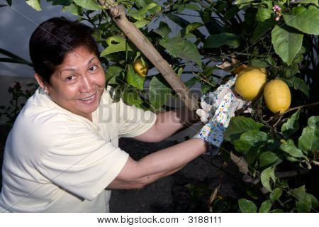 Picking Lemons