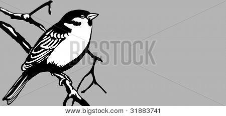 bird on gray background