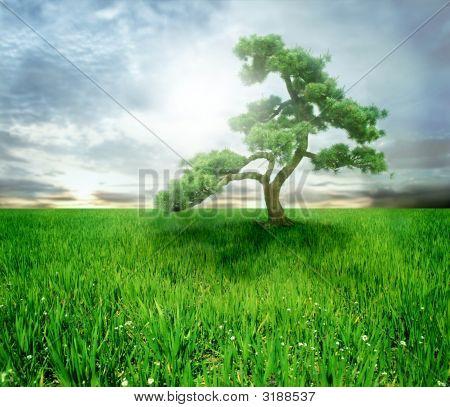 Tree Scene