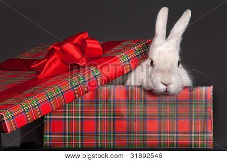 Image of fluffy rabbit in gift-box with red bow