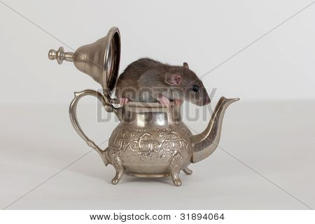 Rat In A Teapot