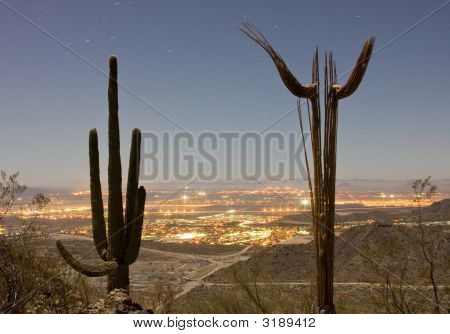 Two Cactus At Night