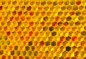There Is No Optical Noise And Aberration. This Pollen And Wax Have A Fine-grained Structure. The Col poster