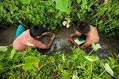 BALI, INDONESIA - MARCH 31: Unidentified poor children catch small fish in a ditch near a rice field