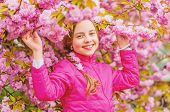 Pink Is My Favorite. Little Girl Enjoy Spring. Kid On Pink Flowers Of Sakura Tree Background. Kid En poster