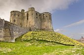 Warkworth Castle With  Daffodils