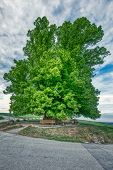 Breathtaking Hdr Shot Of An Old Linden Tree Under Spectacular Sky In Linn poster