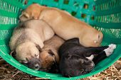 Many Cute Puppies In The Basket, Puppies Look At The Camera,puppy Sleeping On A  Blanket ,cute Dogs  poster