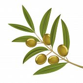 image of olive branch  - Green olives on branch detailed vector illustration - JPG