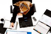 stock photo of multitasking  - busy woman working at her desk - JPG