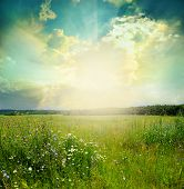 stock photo of grassland  - Green meadow under blue sky with clouds - JPG