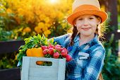 Kids Little Girl Holding Basket Fresh Organic Vegetables Background Home Garden Sunset. Healthy Fami poster