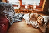 Beagle Dog Slipping On Sheepskin On The Floor In Cozy Home Atmosphere With Candles On The Windowsill poster