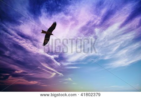 Bird Of Prey Fly In Blue Cloudy Sky