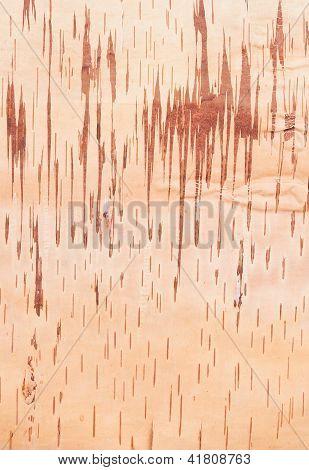 Karelian birch bark