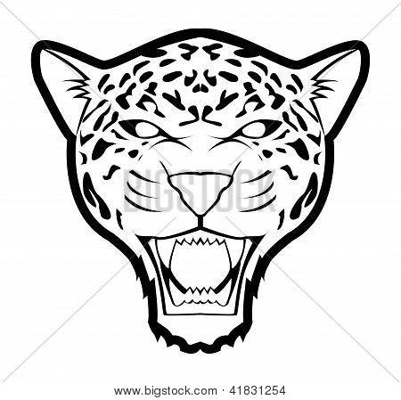 jaguar blanco aislado