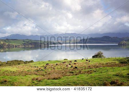 Hokianga Harbour Meadow
