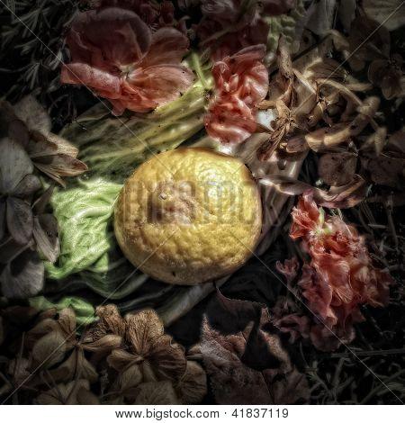 Half of a Lemon on a a Compost Heap