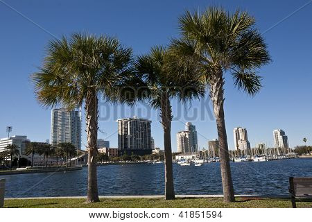 St. Petersburg across the Tampa Bay with palm trees in the foreground