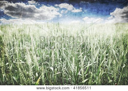 Wheat field and cloudy sky in grunge style.